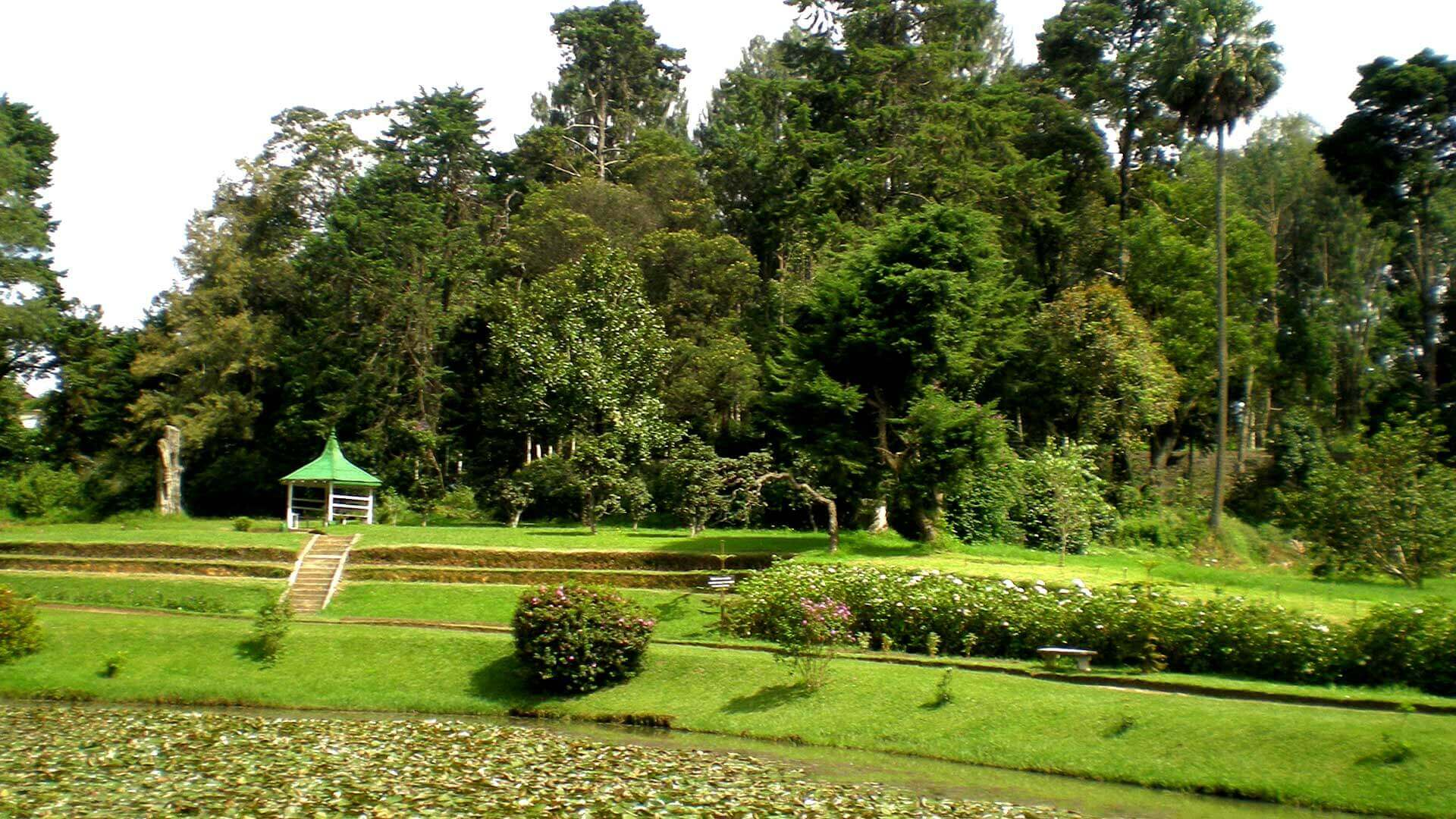 The Golden Ridge - Victoria Park